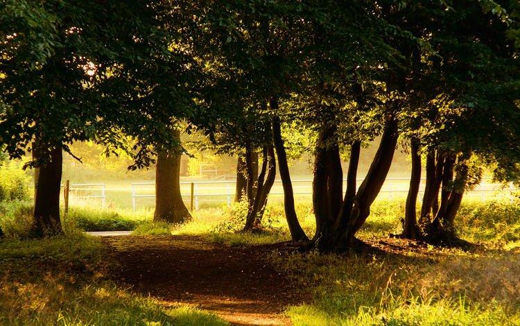Деревья в лучах солнца