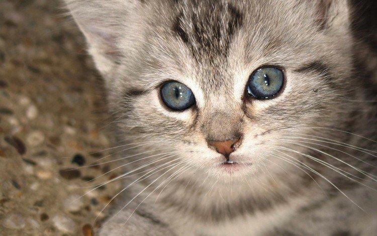 взгляд, котенок, look, kitty