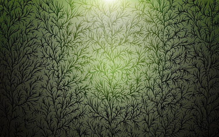 растения, фон, ветки, plants, background, branches