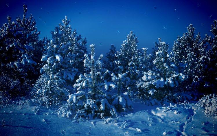 деревья, снег, зима, синий, елки, trees, snow, winter, blue, tree