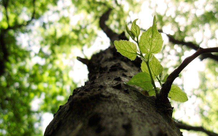 природа, дерево, листья, макро, ветки, nature, tree, leaves, macro, branches