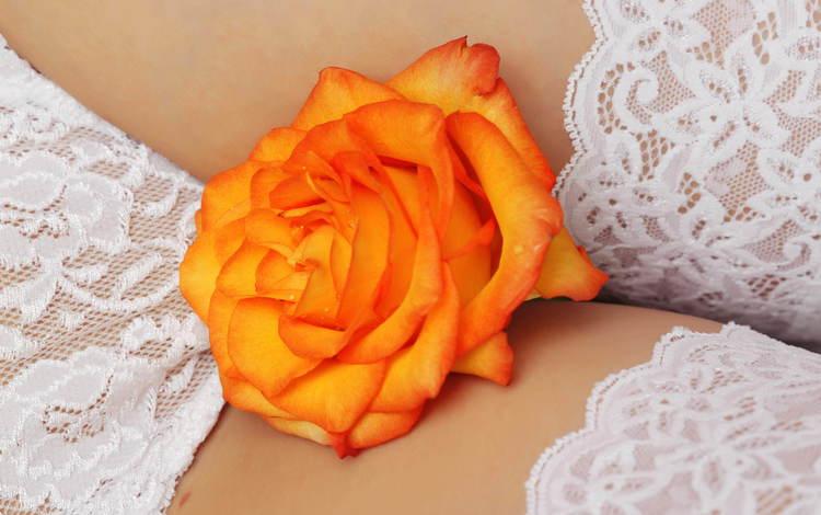 обои, цветок, белое, белье, wallpaper, flower, white, linen