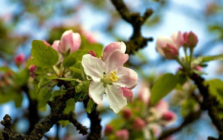 цветы, дерево, весна, flowers, tree, spring