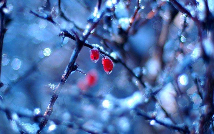 ветки, капли, ягоды, branches, drops, berries