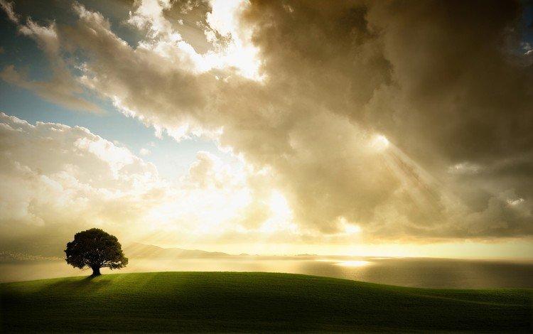 свет, облака, дерево, light, clouds, tree