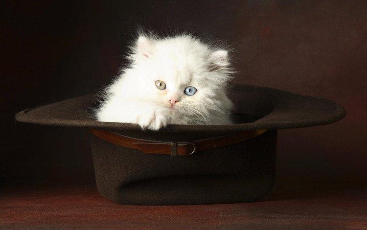 глаза, котенок, пушистый, белый, шляпа, eyes, kitty, fluffy, white, hat