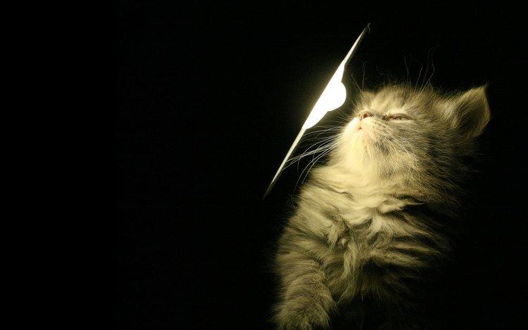 свет, лампа, котенок, light, lamp, kitty