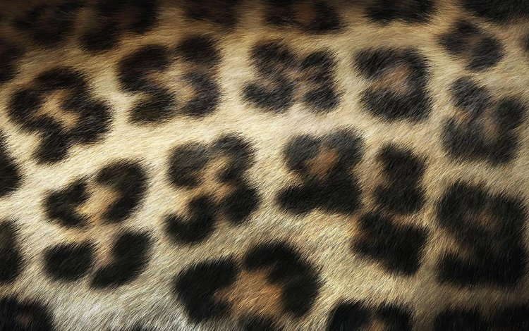шерсть, леопард, пятна, wool, leopard, spot