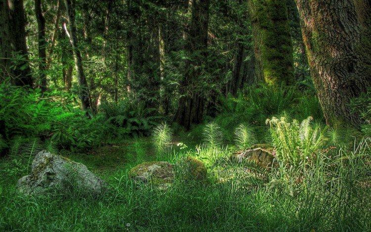 свет, трава, деревья, лес, light, grass, trees, forest