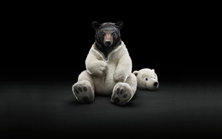 медведь, костюм, шуба, bear, costume, coat