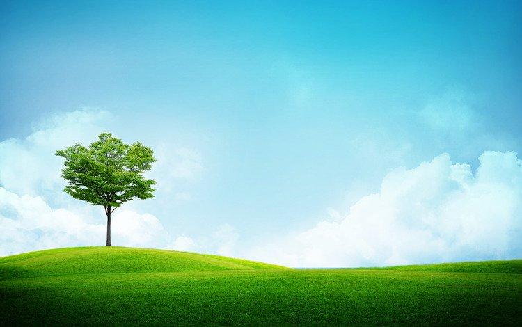трава дерево поле  № 809761 без смс