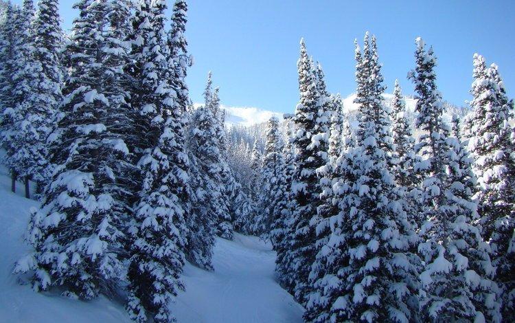 деревья, снег, природа, зима, фото, пейзажи, зимние обои, trees, snow, nature, winter, photo, landscapes, winter wallpaper