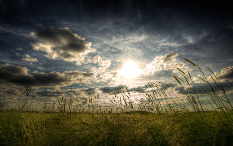 пейзаж, поле, колос, landscape, field, ear