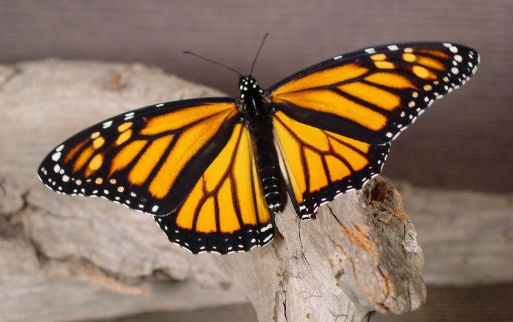 дерево, макро, бабочка, tree, macro, butterfly