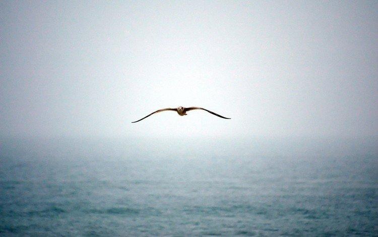 water, fog, seagull