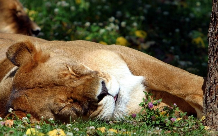 grass, sleeping, leo, language