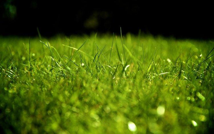 трава, зелень, газон, grass, greens, lawn
