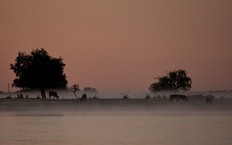 деревья, река, пейзаж, туман, сергей доля, trees, river, landscape, fog, sergey dolya