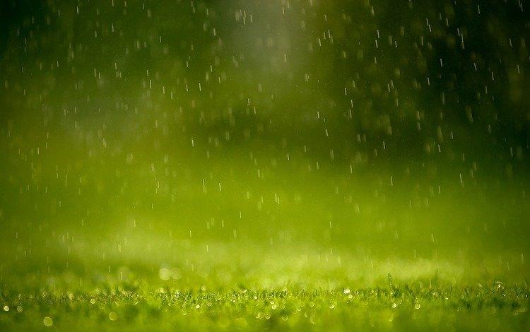 трава, капли, дождь, лужайка, грин, grass, drops, rain, lawn, green