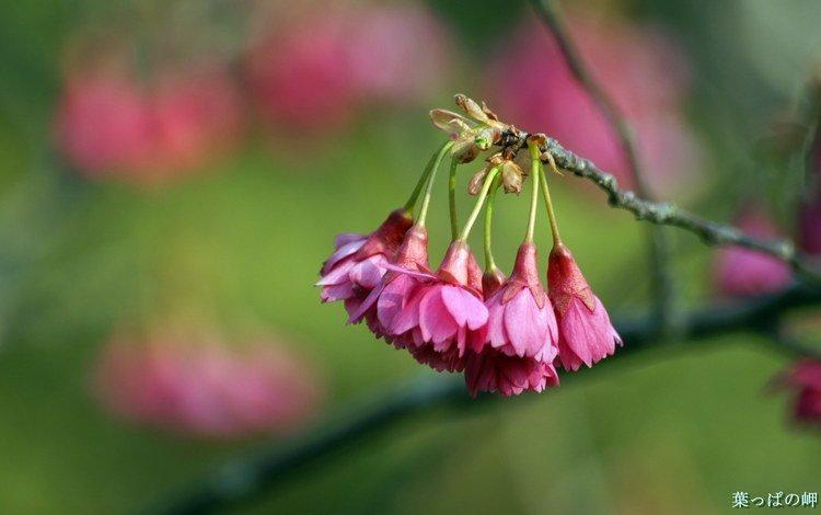 цветок, flower