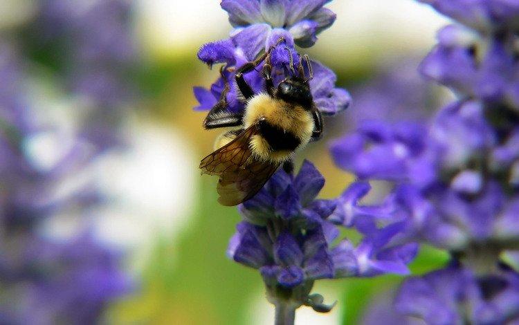цветок, пчела, нектар, опыление, flower, bee, nectar, pollination