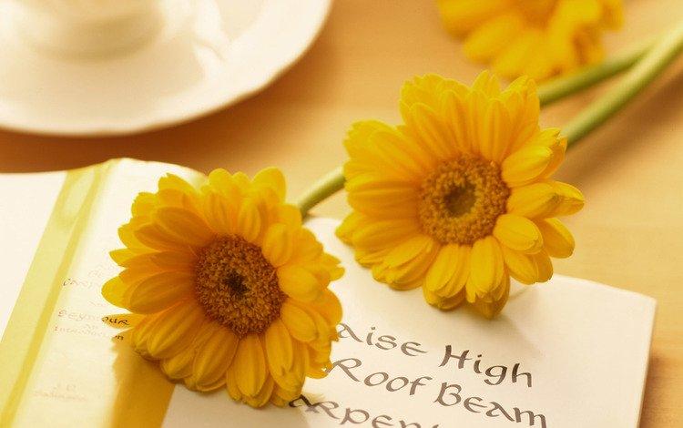 цветы, герберы, открытка, flowers, gerbera, postcard