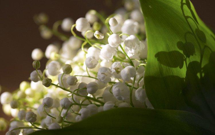 цветы, листья, свежесть, ландыши, весна, flowers, leaves, freshness, lilies of the valley, spring