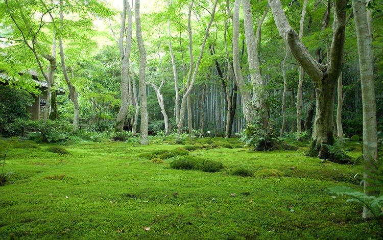 домик в лесу, the cabin in the woods