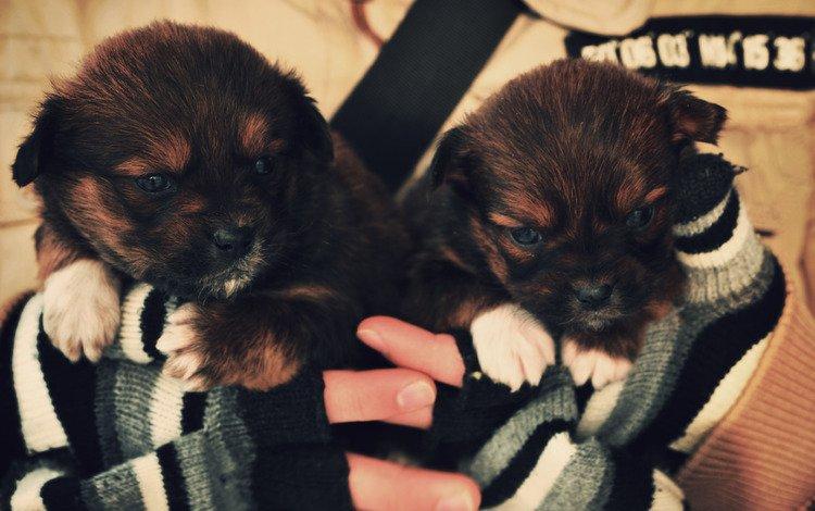 собака, щенок, руки, тепло, варежки, dog, puppy, hands, heat, mittens