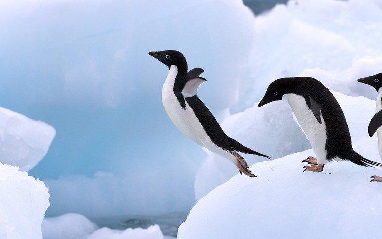 ice, jump, penguin