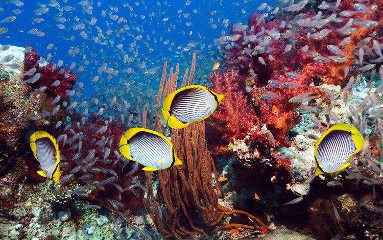 море, рыбки, кораллы, подводный мир, sea, fish, corals, underwater world