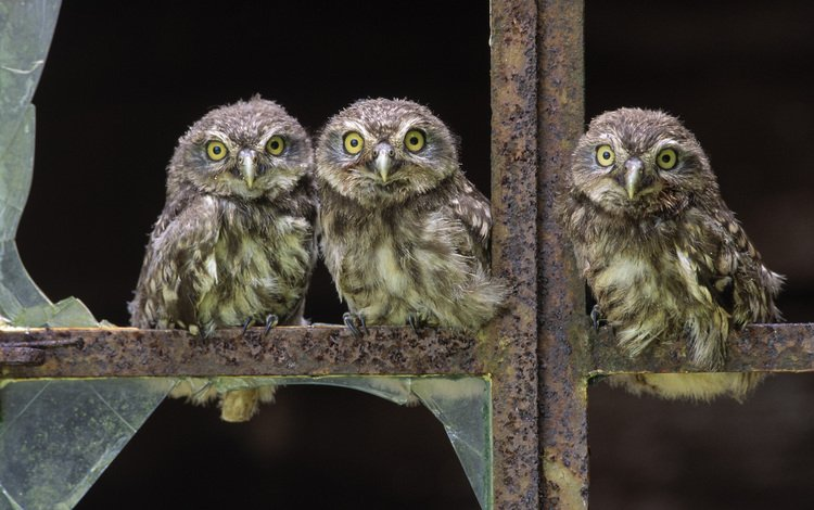 птицы, окно, стекло, птенцы, совы, разбитое, birds, window, glass, chicks, owls, broken