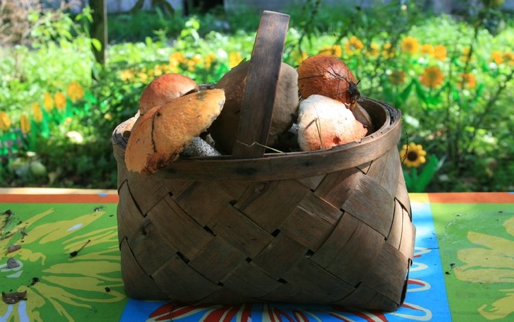 природа, деревня, грибы, разное, прогулка, корзина, nature, village, mushrooms, different, walk, basket