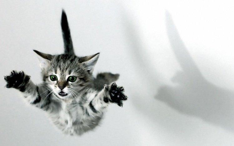 лапы, кошка, котенок, прыжок, тень, paws, cat, kitty, jump, shadow