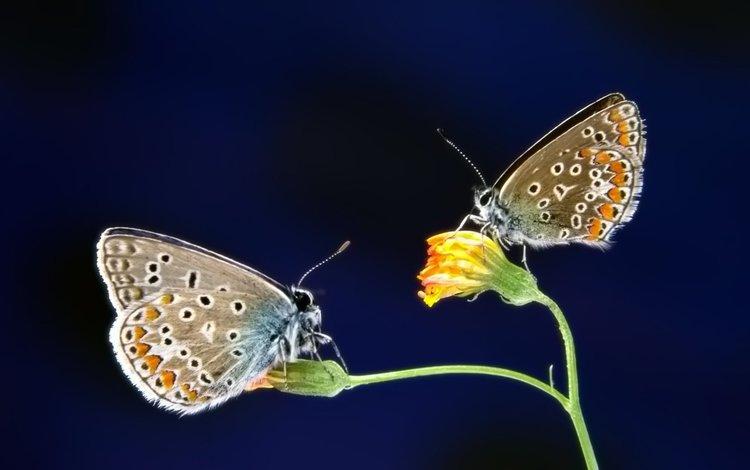 бабочки, butterfly