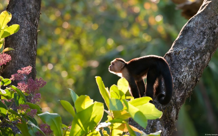 обезьяна, monkey