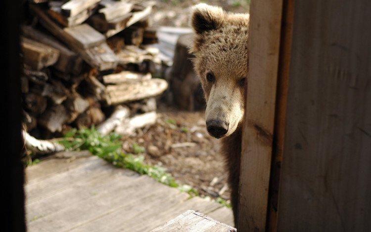 медведь, дом, нос, дрова, медвежонок, хочу кушать, пришёл, в гости, bear, house, nose, wood, want to eat, came, visit