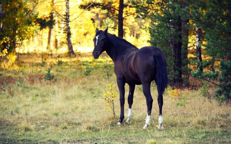 лошадь, вечер, закат, осень, конь, белая метка, horse, the evening, sunset, autumn, white label