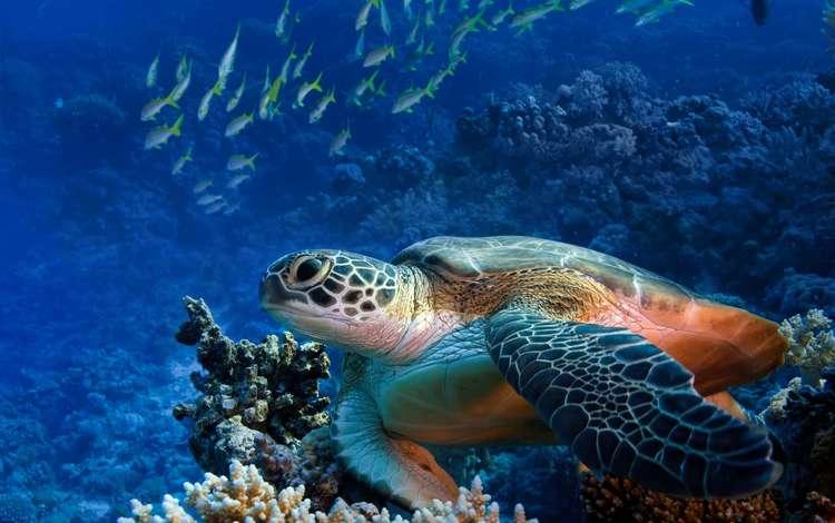 рыбки, черепаха, риф, подводный мир, fish, turtle, reef, underwater world