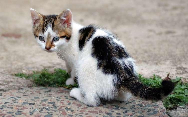котенок, пятнышки, kitty, spots