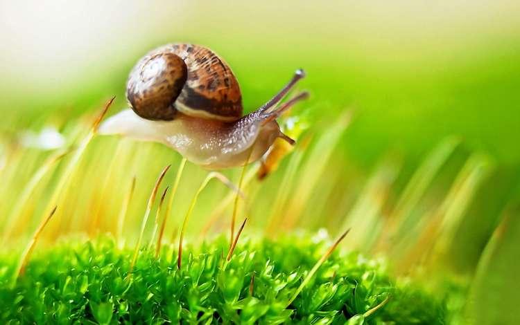 макро, мох, улитка, macro, moss, snail