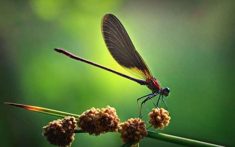 насекомые, стрекоза, insects, dragonfly