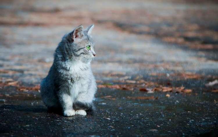 листья, фон, кошка, котенок, улица, асфальт, leaves, background, cat, kitty, street, asphalt