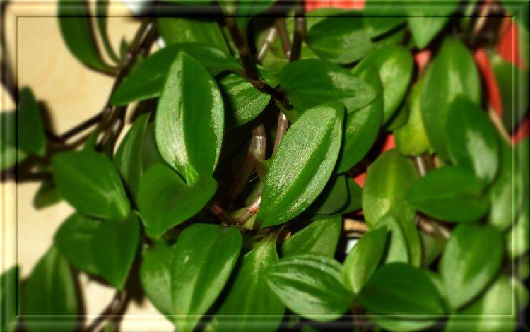 Домашний зелёные цветы