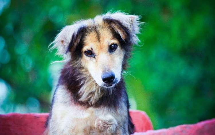 взгляд, собака, друг, lindo cao, look, dog, each