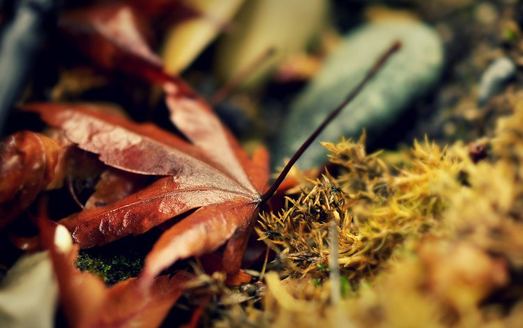 природа, листья, макро, листва, осень, мох, nature, leaves, macro, foliage, autumn, moss