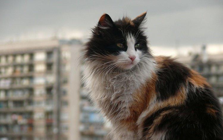 кот, город, кошка, пушистый, грязный, уличный кот, cat, the city, fluffy, dirty, outdoor cat