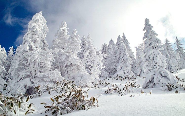 небо, деревья, снег, лес, зима, ели, the sky, trees, snow, forest, winter, ate