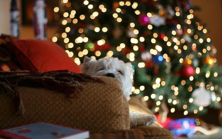 огни, диван, новый год, белая, елка, с новым годом, настроение, 2013, герлянда, подушки, пледы, подарки, собака, дом, lights, sofa, new year, white, tree, happy new year, mood, garland, pillow, blankets, gifts, dog, house