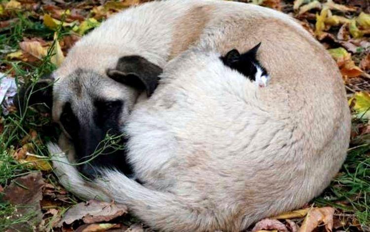 кошка, собака, бездомные, cat, dog, homeless
